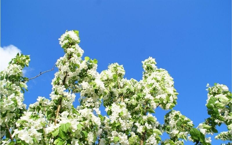 Spring flowers and blue sky.