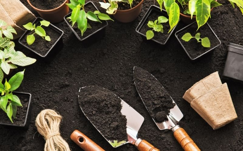 Plants surrounded by dirt and shovels.