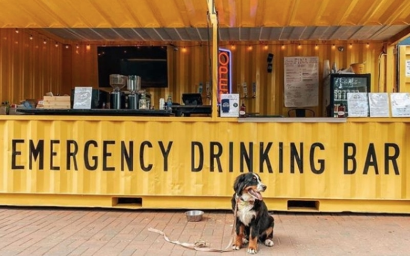 Dog in front of yellow bar at Wild Heaven Brewing