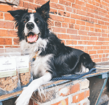 Dog with Farm Hounds treats